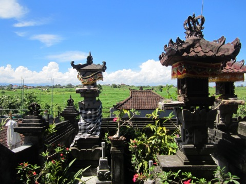 View of the rice field from Newman's home temple