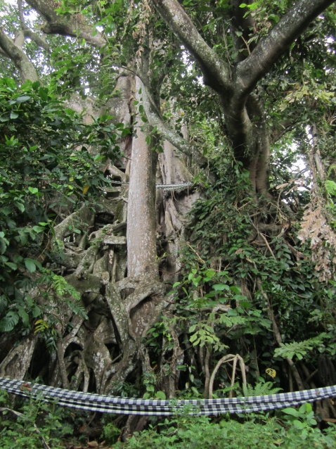 This sacred Gesing banyan tree once hid heroes of Indonesian independence
